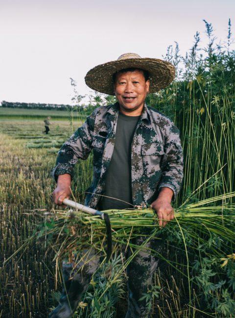 Happy hemp field worker